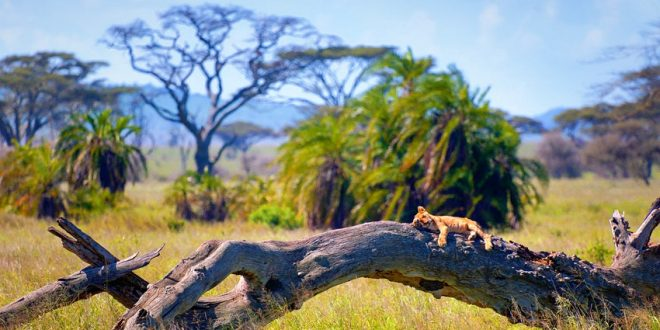 East Africa: best for a group tour